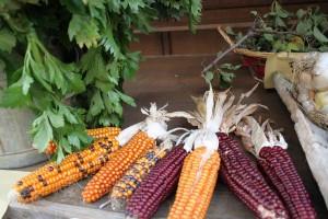 Local farming products fair Marche festivals