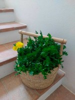 Wild greens foraging holiday Marche Urbino Italy countryside agriturismo