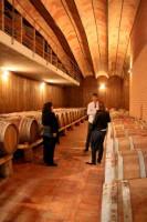 Visit modern cellar cantina Rosso conero Marche Italy