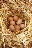 Organic eggs Farmstay holiday Marche green holidays Italy