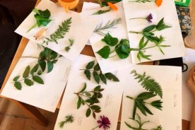 italy Marche natural vegetal dyes dyeing course