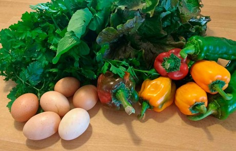 Organic vegetables eggs Eco holiday rental Farmstay Italy