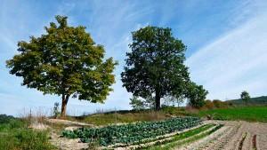 Organic kitchen garden Green holidays Marche Farmstay