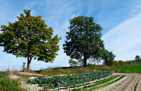Organic kitchen garden Green holidays Marche Farmstay