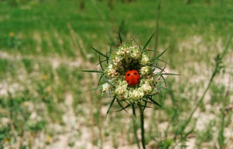 Ladybird green accommodation marche Italy