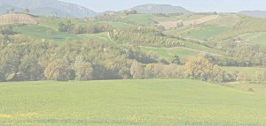 Green view Spring Le Marche hills farmholiday accommodation on a farm