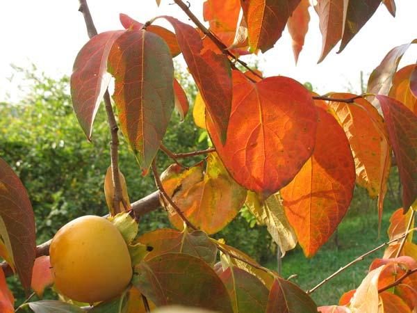 Green holidays Marche organic farming Italy